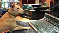 best mixing engineer's pitfalls